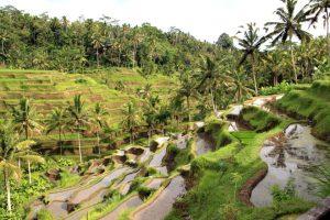 rice_plantation