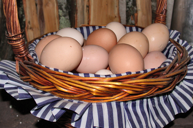 dont_put_your_eggs_one_basket